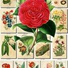 FLOWERS-26 70 vintage print