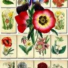 FLOWERS-47 62 vintage print