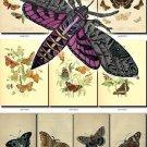 BUTTERFLIES-4 203 vintage print