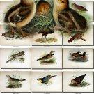 BIRDS-73 90 vintage print