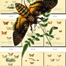 BUTTERFLIES-25 73 vintage print