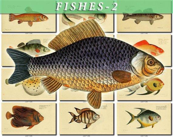 FISHES-2 209 vintage print