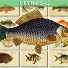 FISHES-2 209 vintage print