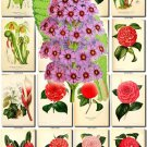 FLOWERS-53 88 vintage print