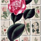 FLOWERS-59 266 vintage print