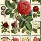 FLOWERS-101 264 vintage print