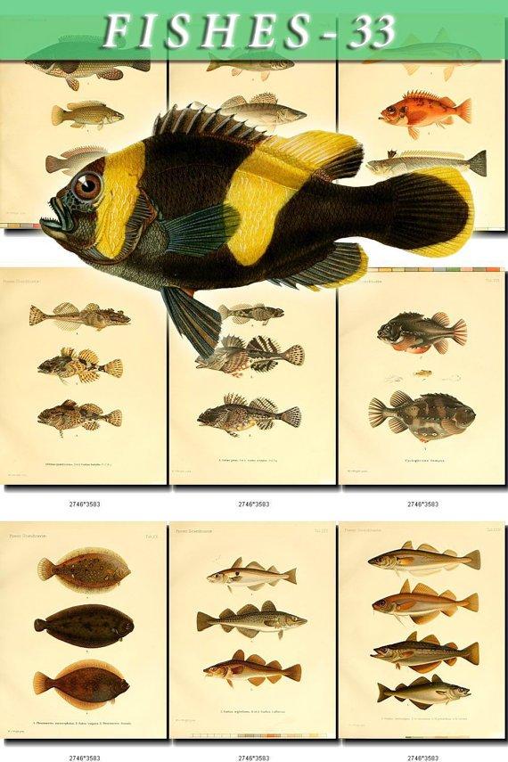 FISHES-33 51 vintage print