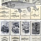 FISHES-45-bw 128 vintage print