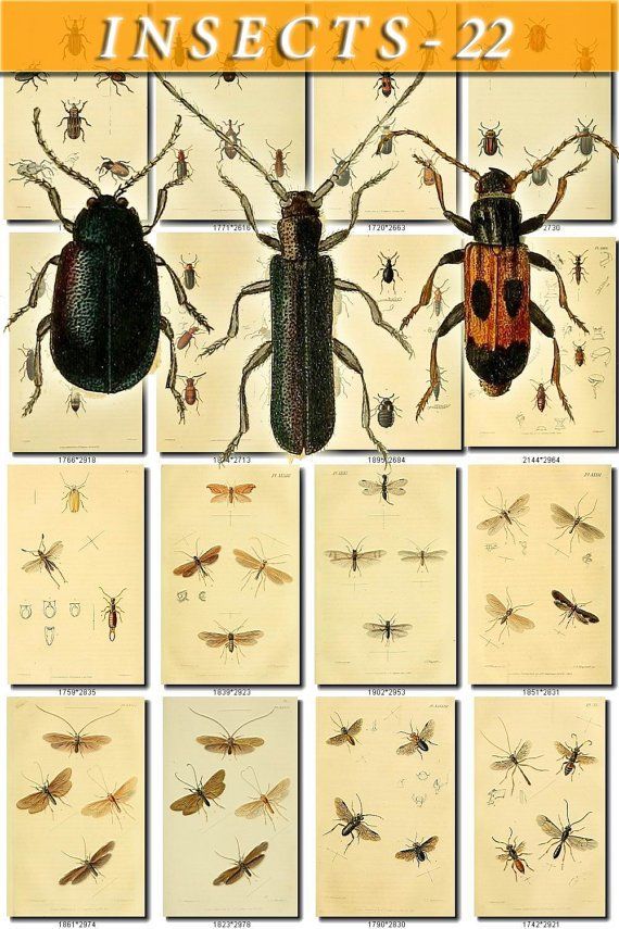 INSECTS-22 124 vintage print