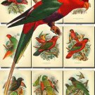 PARROTS-1 61 vintage print