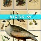 BIRDS-99 127 vintage print