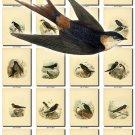 BIRDS-157 103 vintage print