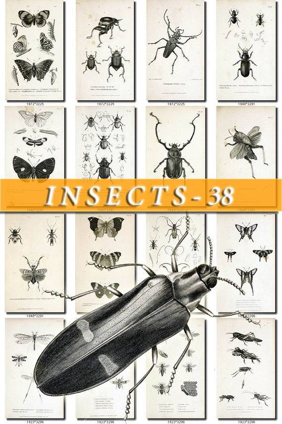 INSECTS-38-bw 172 vintage print