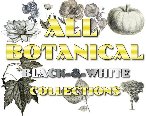 BOTANICAL black-, -white Collections 1-26 with 8600 vintage print