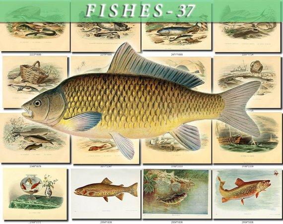 FISHES-37 63 vintage print