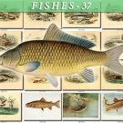 FISHES-37 63 vintage print