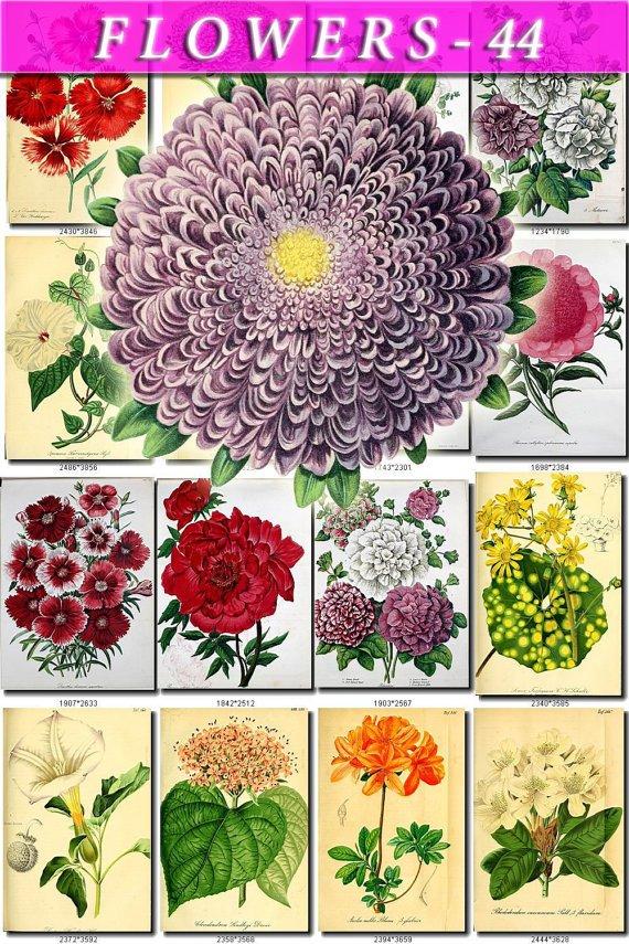 FLOWERS-44 55 vintage print