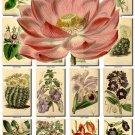 FLOWERS-70 252 vintage print