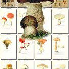 MUSHROOMS-9 232 vintage print