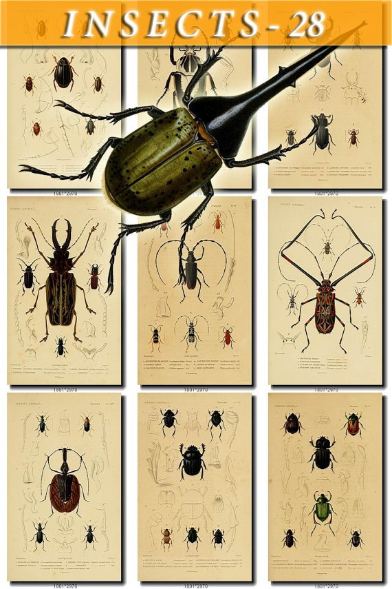 INSECTS-28 108 vintage print