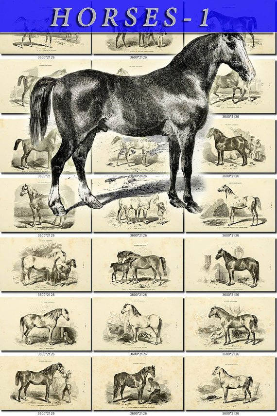 HORSES-1-bw 50 vintage print