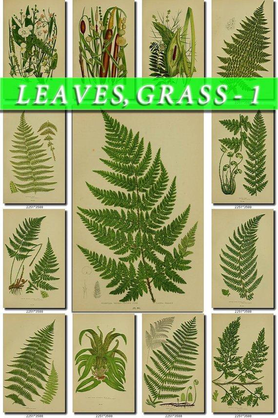 LEAVES GRASS-1 248 vintage print