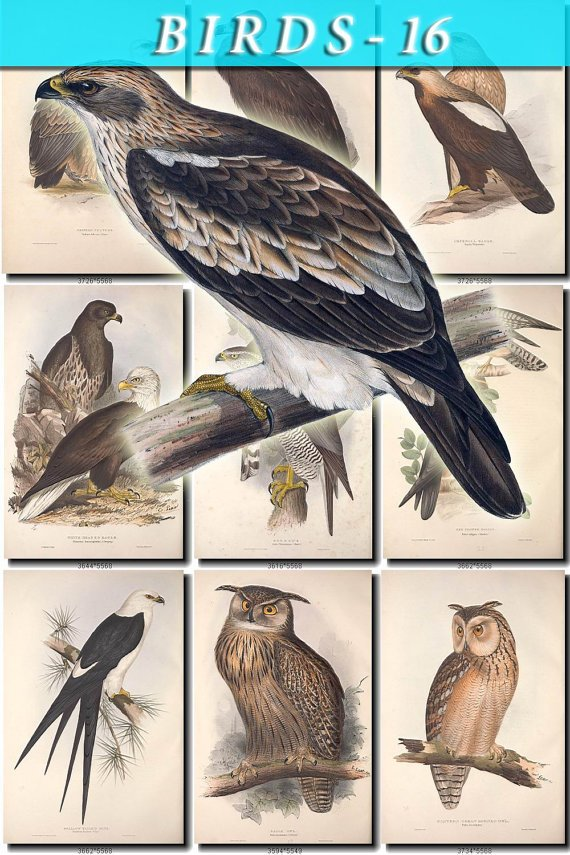 BIRDS-16 254 vintage print