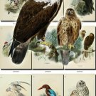 BIRDS-60 89 vintage print