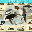 BIRDS-118 140 vintage print