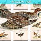 BIRDS-120 51 vintage print