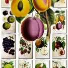 FRUITS VEGETABLES-6 51 vintage print