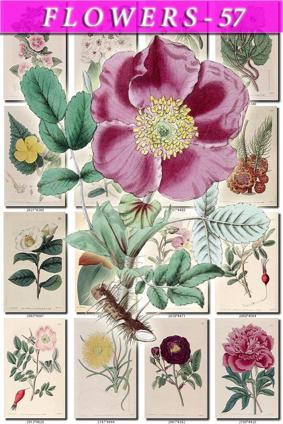 FLOWERS-57 257 vintage print