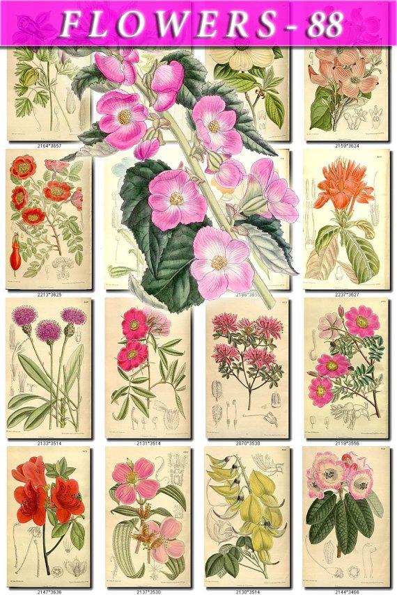 FLOWERS-88 240 vintage print