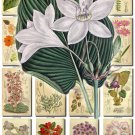 FLOWERS-89 210 vintage print