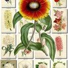 FLOWERS-100 252 vintage print
