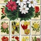 FLOWERS-104 280 vintage print