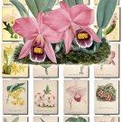ORCHIDS-14 flowers 265 vintage print