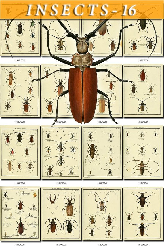 INSECTS-16 172 vintage print