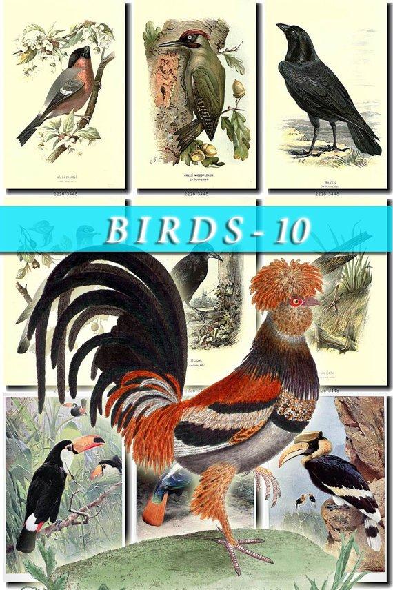 BIRDS-10 219 vintage print