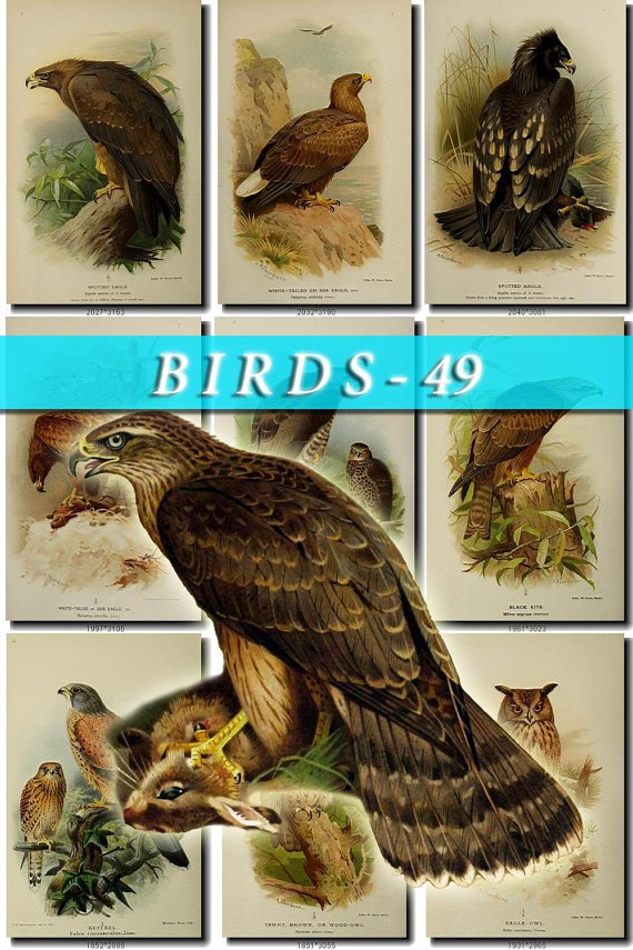 BIRDS-49 48 vintage print