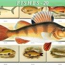 FISHES-20-b2 138 vintage print