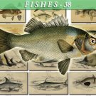 FISHES-38 67 vintage print
