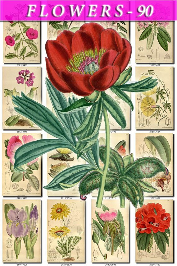 FLOWERS-90 131 vintage print