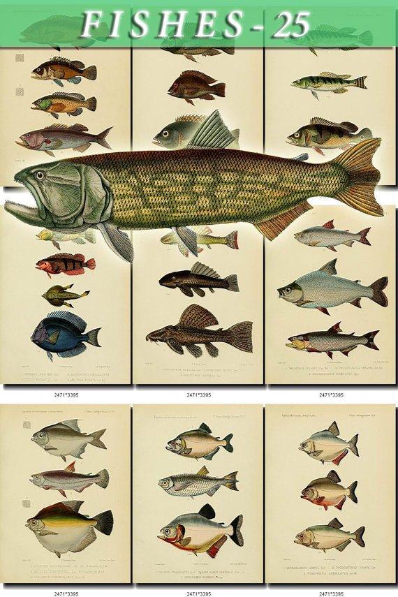 FISHES-25 84 vintage print