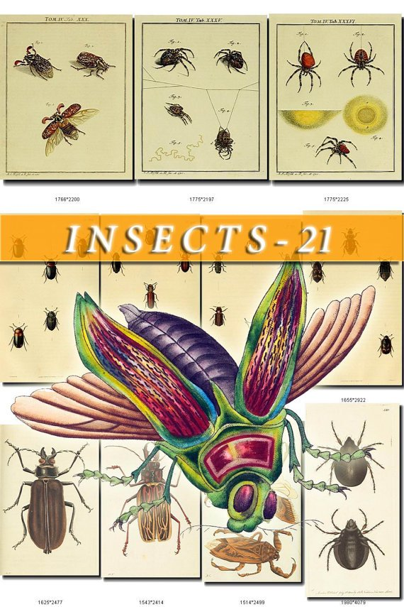 INSECTS-21 174 vintage print