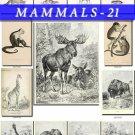 MAMMALS-21-bw 102 black-, -white vintage print