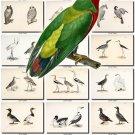 BIRDS-28 205 vintage print