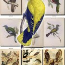BIRDS-79 191 vintage print