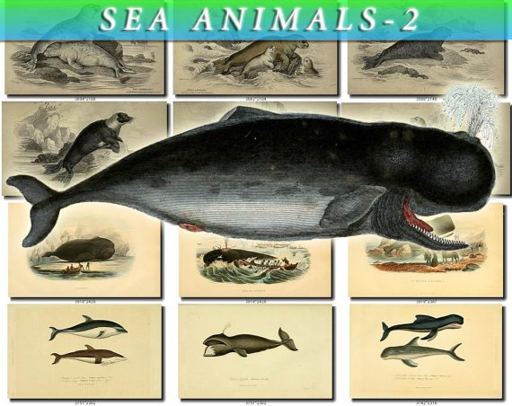 SEA ANIMALS-2 148 vintage print