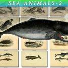 SEA ANIMALS-2 148 vintage print